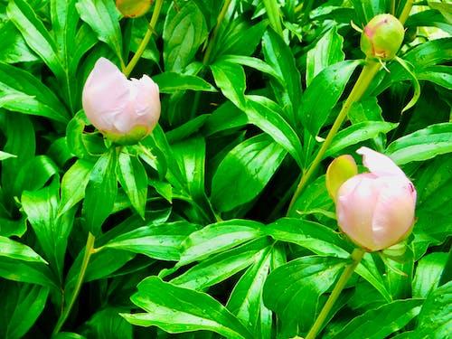 Foto profissional grátis de pequenos botões de flores depois da chuva