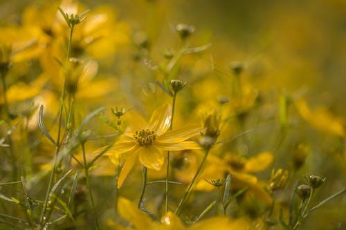 Безкоштовне стокове фото на тему «#flower»