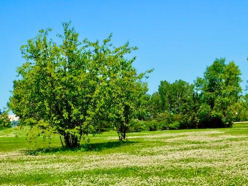 Foto profissional grátis de belas árvores, beleza na natureza, descanso, relaxamento