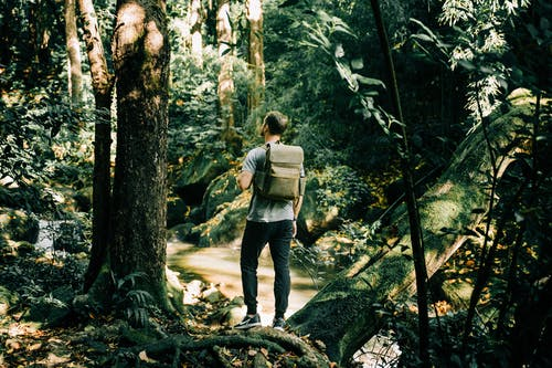 Woman in Gray Jacket and Black Pants Standing on Brown Tree Log in Forest