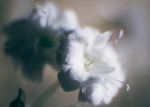 Free stock photo of flor, flor blanca, macro, naturaleza