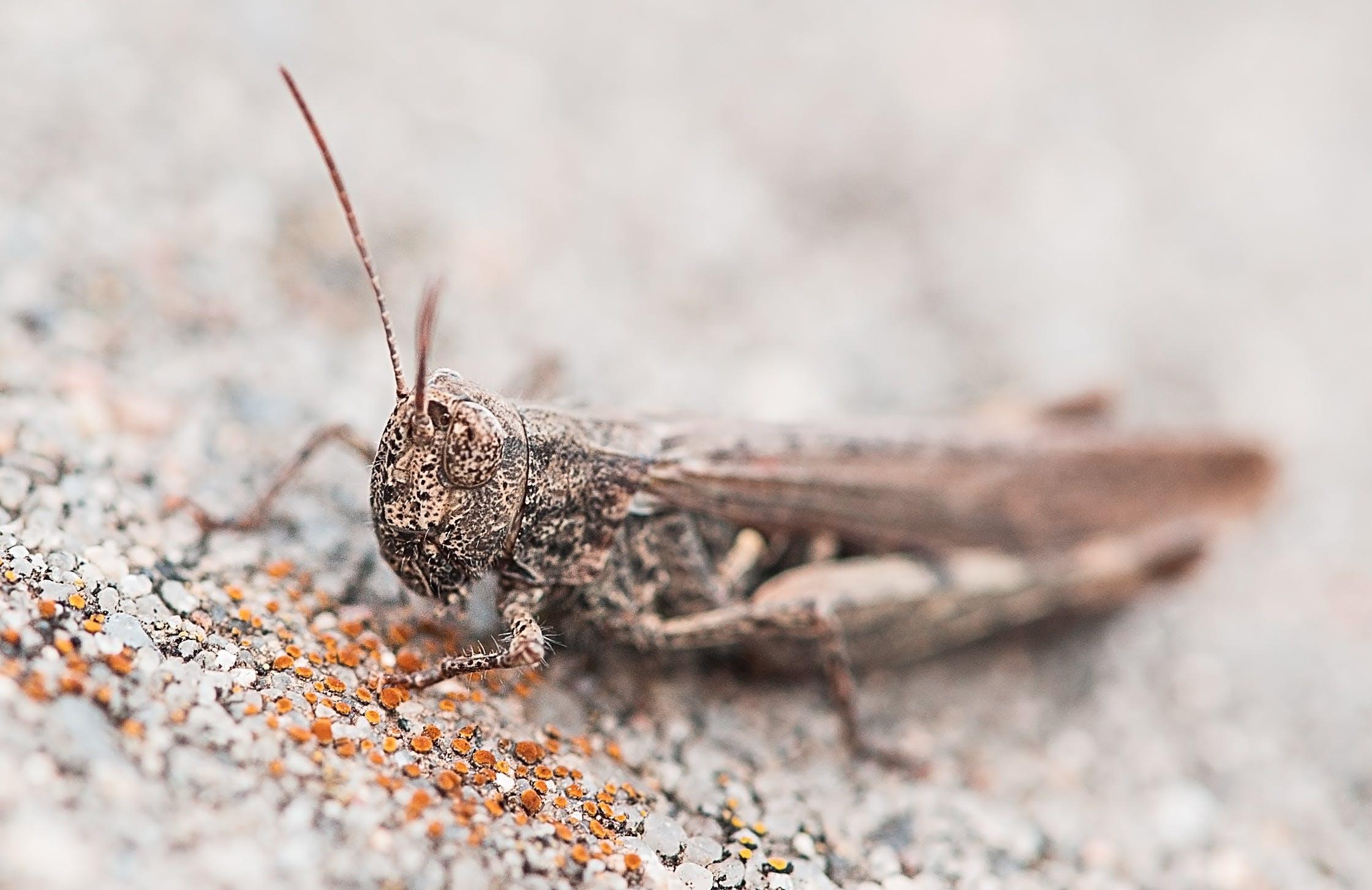 Gratis lagerfoto af close-up, insekt, makro
