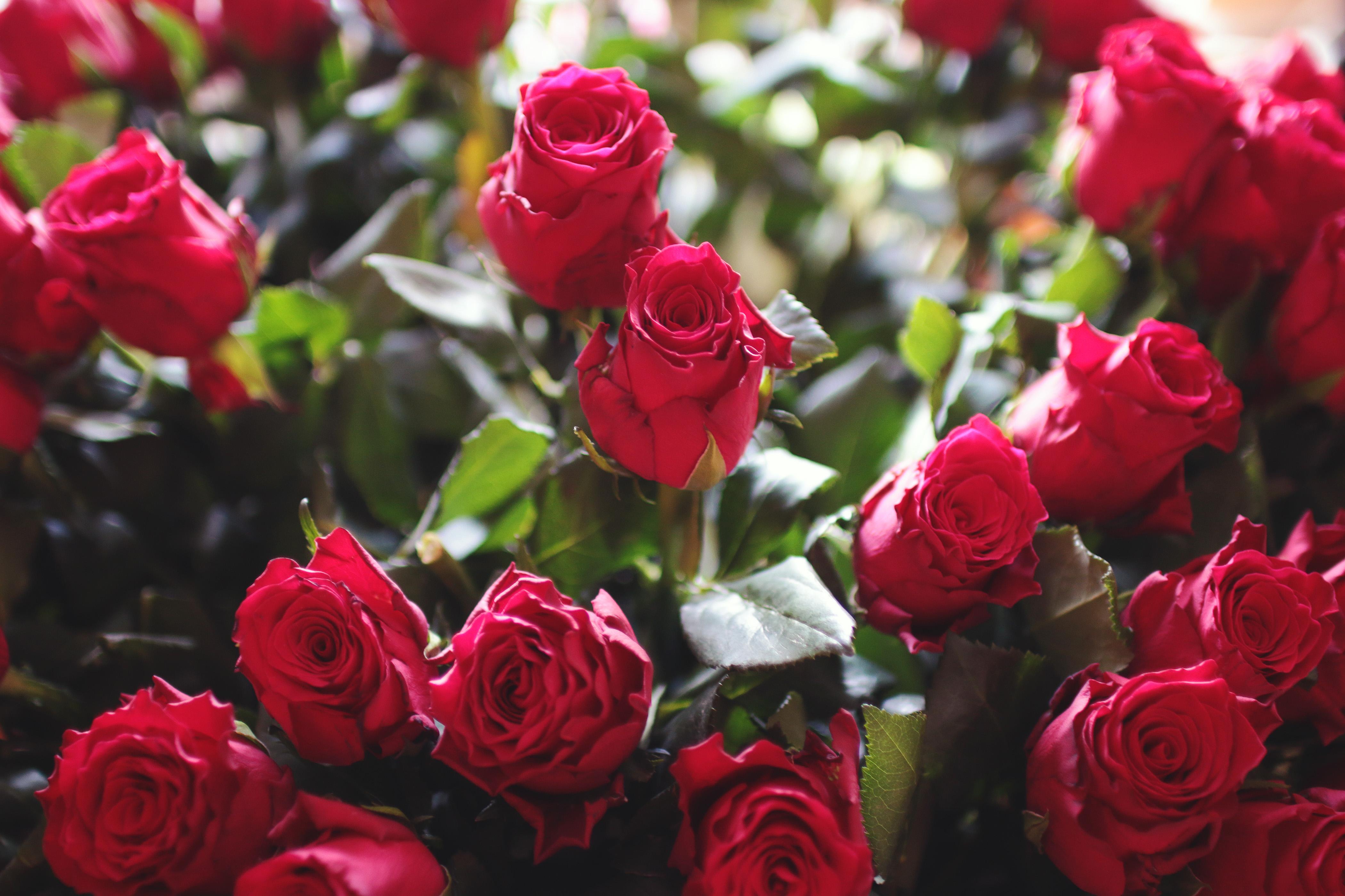 Flowers download acurnamedia flowers download izmirmasajfo