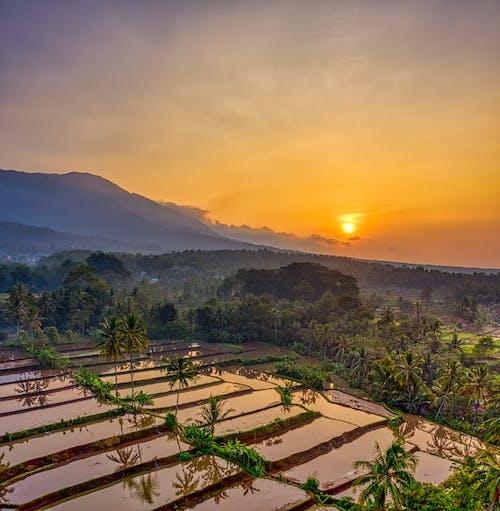 Immagine gratuita di acqua, aereo, agricoltura, alba