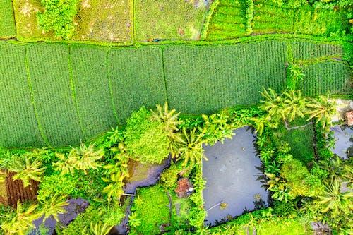 Immagine gratuita di acqua, aereo, albero, ambiente