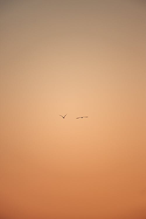 Silhouette of birds in distance spreading wings on orange sky while flying in sunset time in evening in nature outside