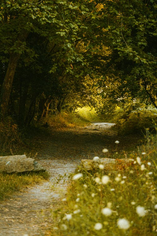 Narrow pathway between lush green trees in forest