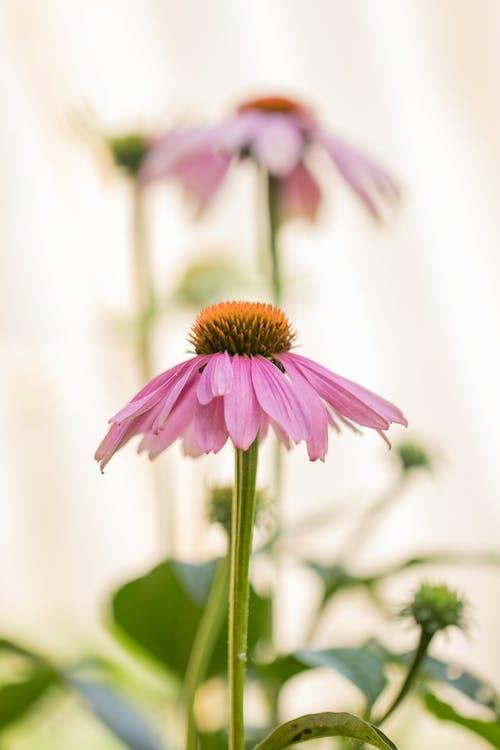 Безкоштовне стокове фото на тему «#flower #zonnehoed»