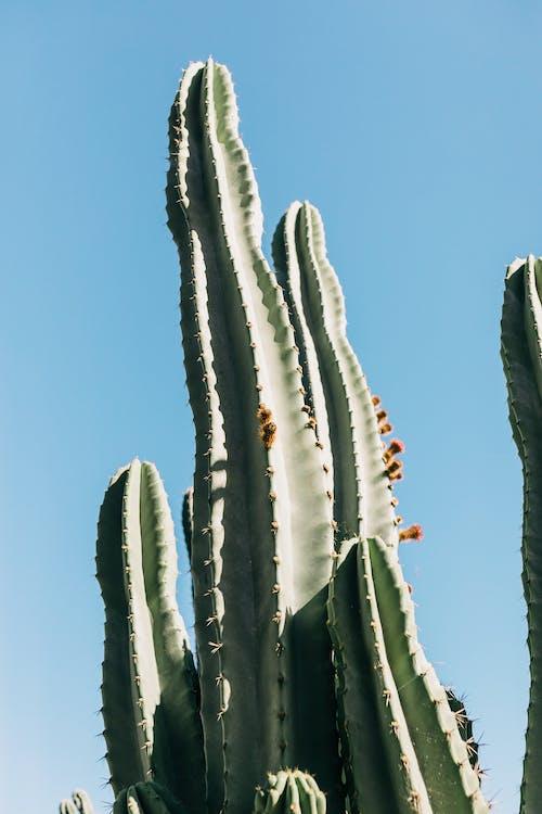 High green cactus under blue sky in sunlight
