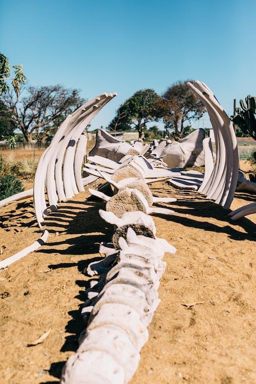 Whale skeleton on sandy land in desert