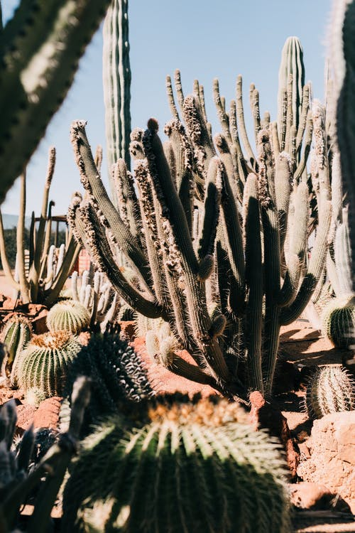 Assorted green cacti with thorny stalks growing on dry terrain under blue sky in botanical garden