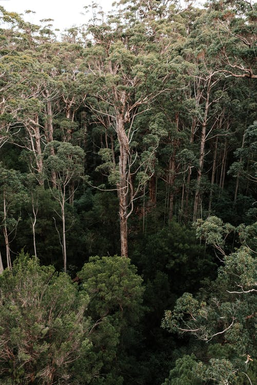 Tropical forest with dense vegetation in nature
