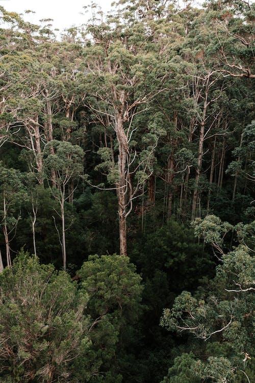 Foto profissional grátis de aéreo, altura, animais selvagens, antena