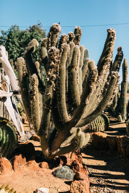 Cacti growing in arid exotic terrain