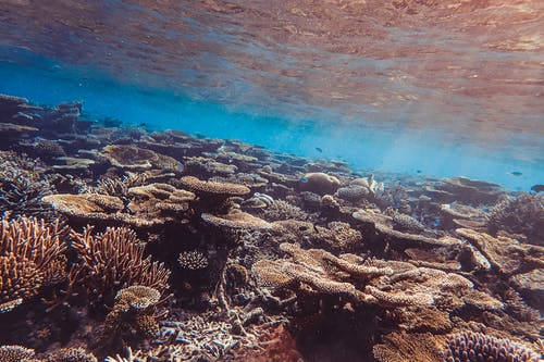 Brown and Gray Coral Reef