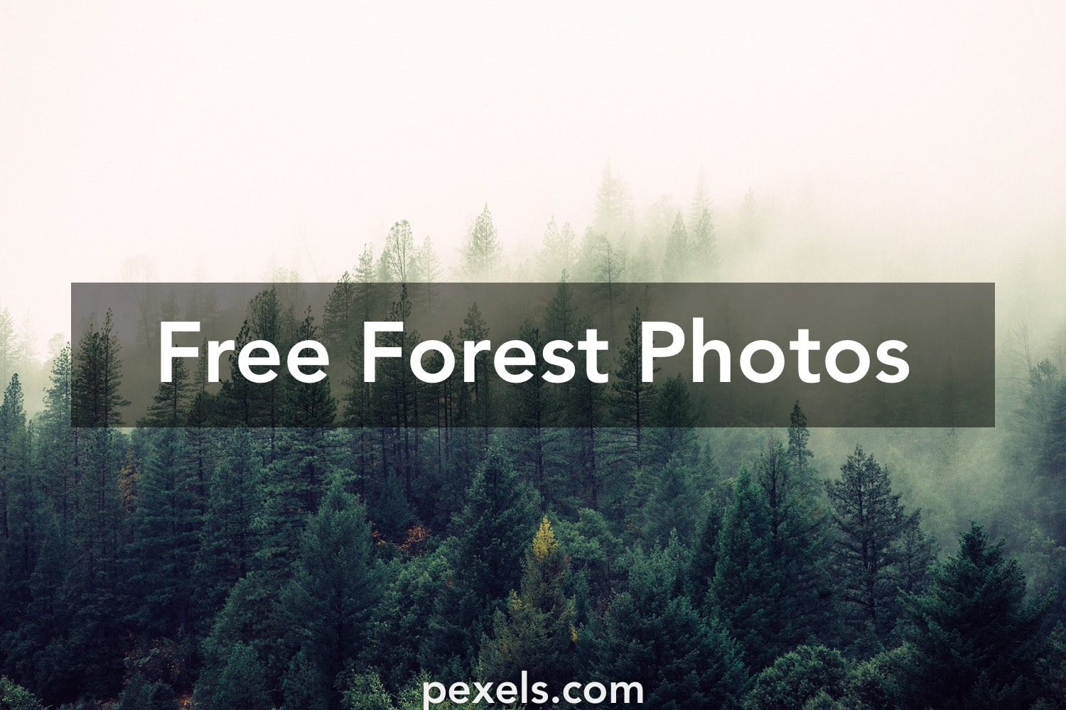 Forest Pictures · Pexels · Free Stock Photos