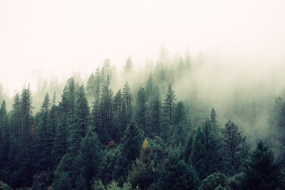 fog, foggy, forest