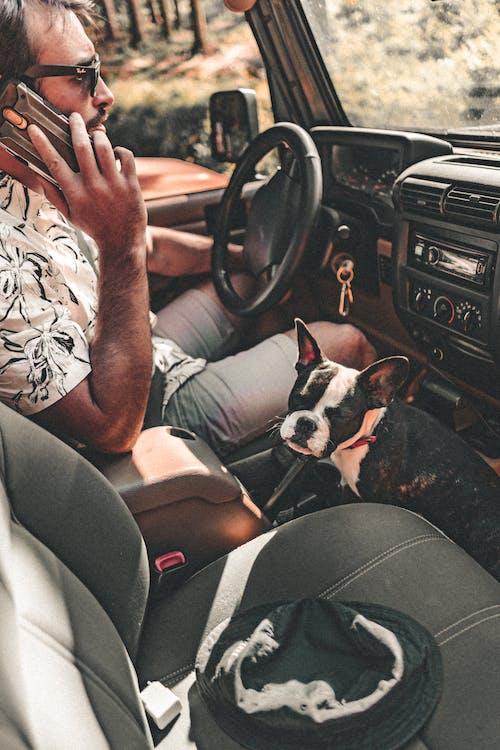 Безкоштовне стокове фото на тему «bob, chien, voiture»