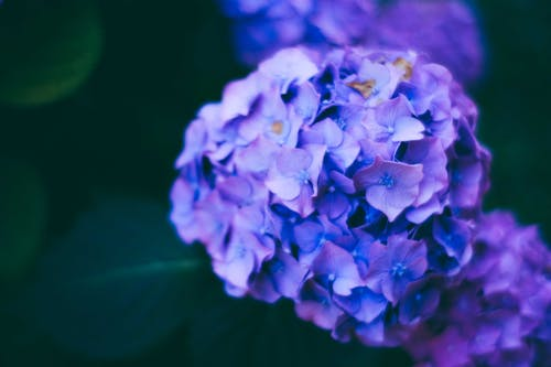 Bahçe, bitki örtüsü, buket, bulanıklık içeren Ücretsiz stok fotoğraf