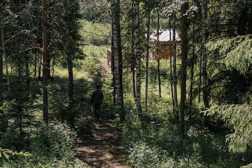 Man in Black Jacket Walking on Forest