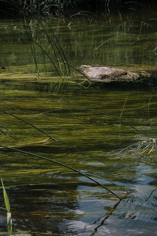Brown and Green Grass on Water