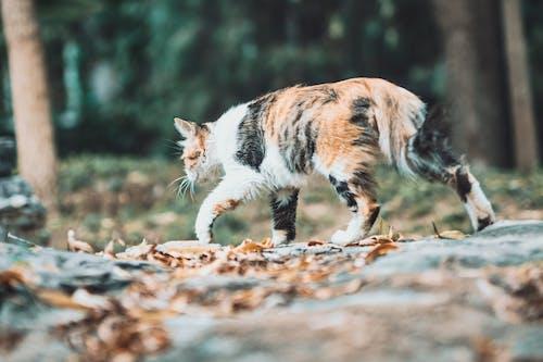 Imagine de stoc gratuită din 动物 和 宠物, 可爱, 宠物 猫, 晴朗