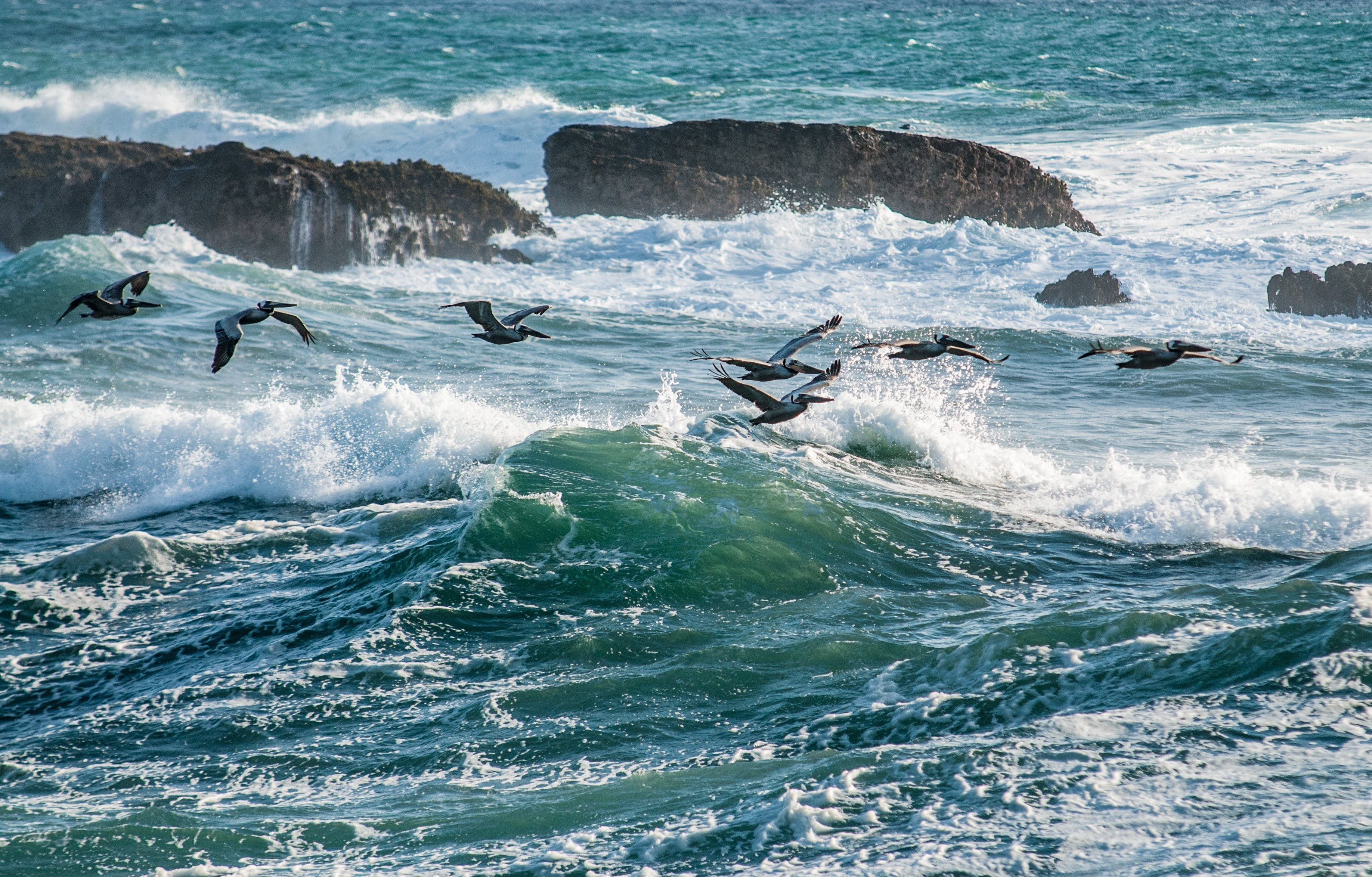 Bids Flying over Sea Waves during Daytime