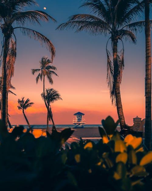 Palms on sunset sky in summer