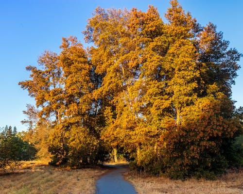 Immagine gratuita di alberi, esterno, fuoco, luce del sole