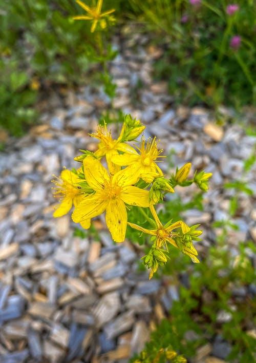 Foto stok gratis kwiaty, lato, natura, sztokholm