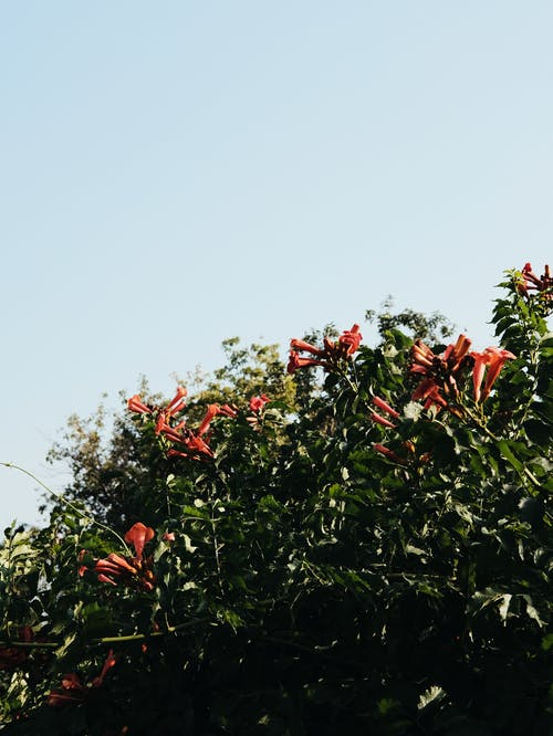 Free stock photo of beautiful nature, beautiful sky, beauty of nature
