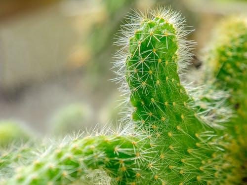 Free stock photo of Budapest, cactus, europe