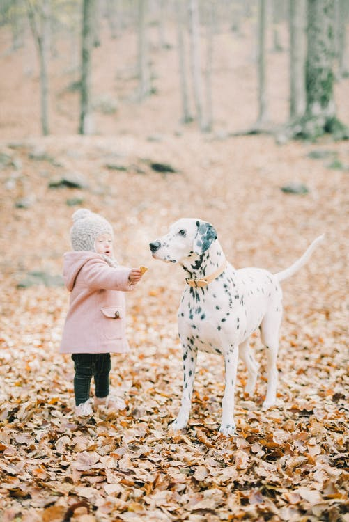Girl in Pink Jacket Standing Beside Dalmatian Dog