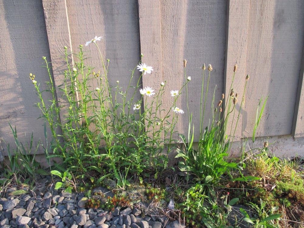 Free stock photo of Catskill Wildflowers and Grass