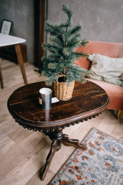 From above of small natural Christmas tree in pot placed on wooden table in cozy room
