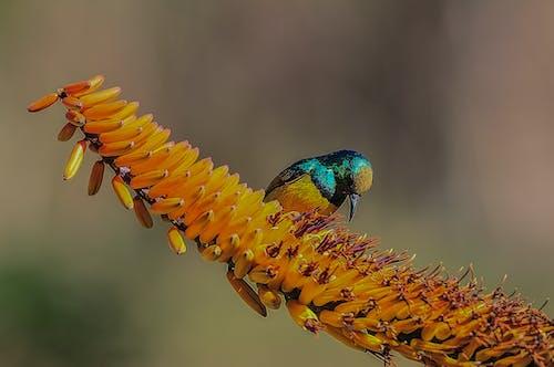Kostnadsfri bild av fågel, nektar, vildfågel