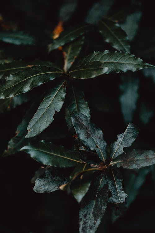 Green plant with wavy leaves in night garden