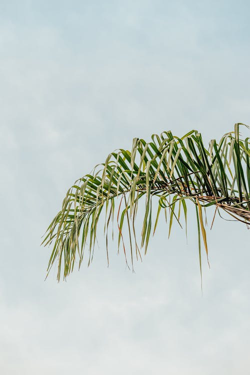 Palm tree leaf under cloudy sky in summer