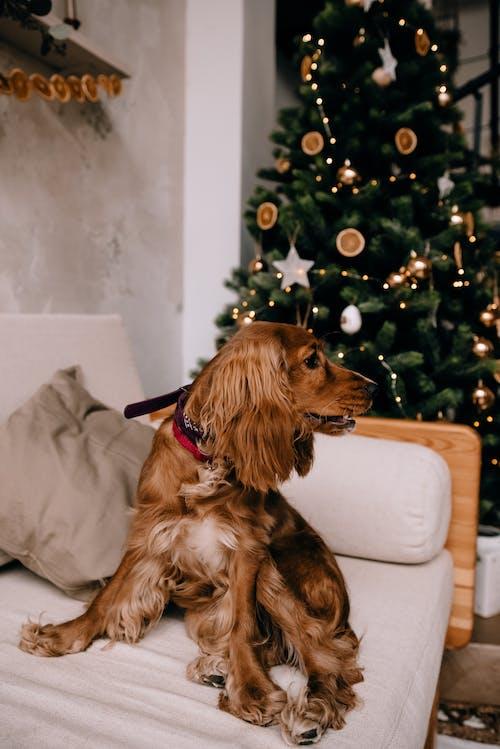 ağaç, apartman, Aralık, atmosfer içeren Ücretsiz stok fotoğraf