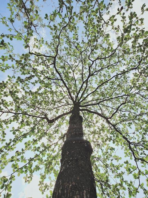 Fotos de stock gratuitas de árbol, bañador, baúl, corteza