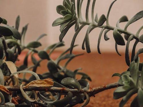 Ingyenes stockfotó amante de la naturaleza, colores naturales, hojas témában