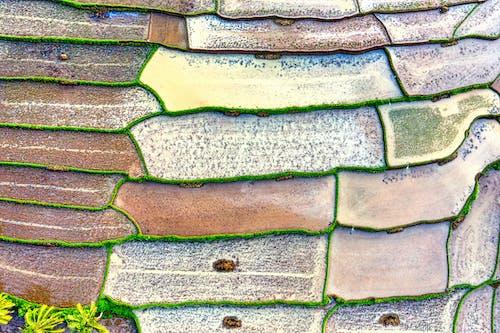 Immagine gratuita di acqua, aereo, agricoltura, albero