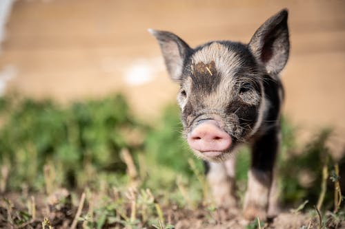 Foto stok gratis agrikultura, bayi, belum tua, binatang