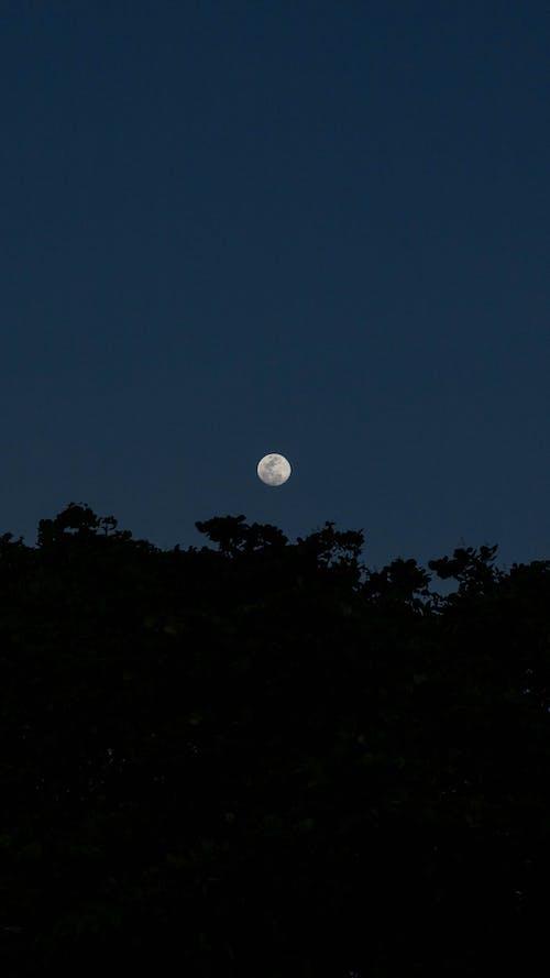 Foto d'estoc gratuïta de a l'aire lliure, arbre, astronomia, clareja
