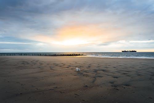 Free stock photo of beach sunset, boat, cadzand