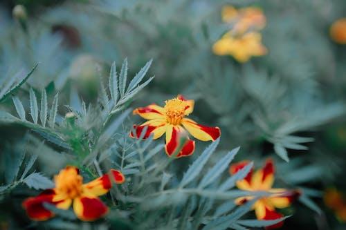 Vivid Marigold flowers in park
