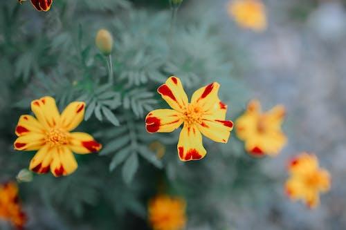 Vivid yellow flowers in green garden