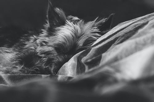 Free stock photo of adorable, animal, at-home, black-and-white
