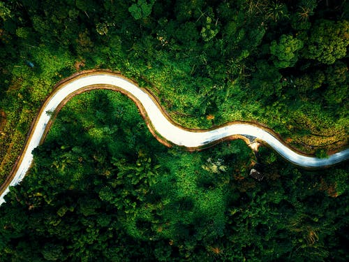 Drone with of curvy roadway leading through green woods with tropical trees on sunny day