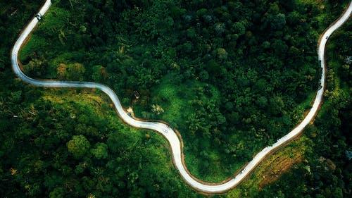 Curvy road through green forest in summer